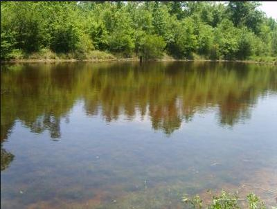 Lake Mike Conner Campground Covington County Mississippi